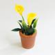 黃色海芋盆花