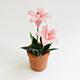 粉紅小花盆