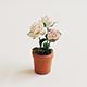 白色玫瑰花盆