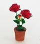 紅色玫瑰花盆
