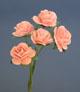 粉橘玫瑰花(大)-5朵1組