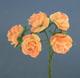 嫩黃白玫瑰花(大)-5朵1組