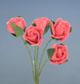 梅紅色玫瑰花(中)-5朵1組