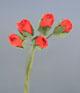 紅色玫瑰花(小)-5朵1組