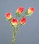 紅/白雙色玫瑰花(小)-5朵1組
