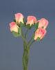 粉/白雙色玫瑰花(小)-5朵1組