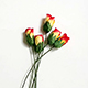 紅/黃雙色玫瑰花(大)-5朵1組